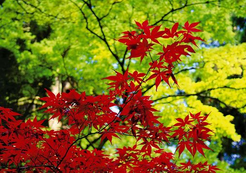 Giardino zen le piante for Accessori giardino giapponese