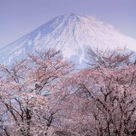 cherry-blossoms-and-mt-fuji