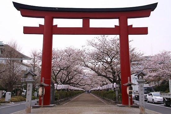 sakura-at-kamakura.jpg
